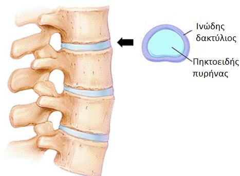 spine8_